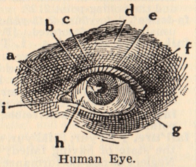 Vintage Clip Art - Eye Diagram - The Graphics Fairy