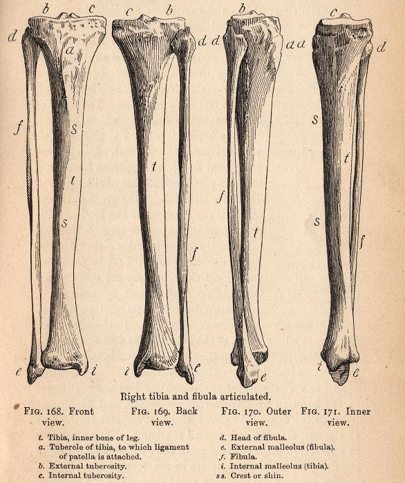 Vintage Halloween Clip Art Spooky Bones The Graphics Fairy