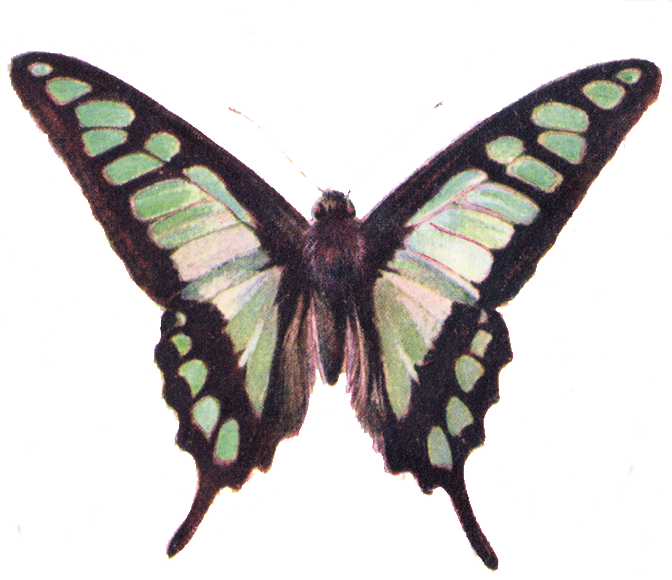 free vintage butterfly clipart - photo #7