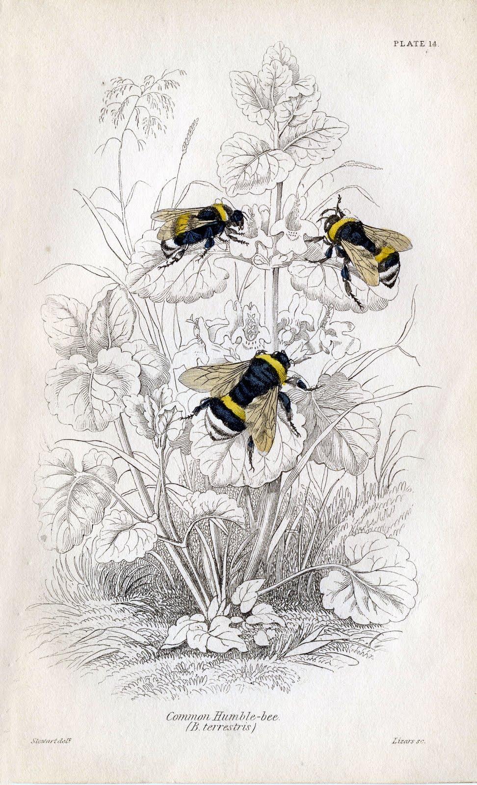 vintage bee clip art - photo #22