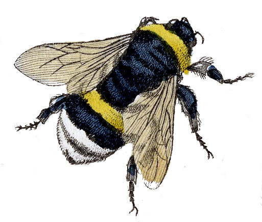 Bumble Bee Clip Art Gr...