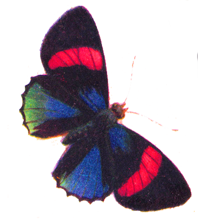 free clip art gorgeous butterfly the graphics fairy