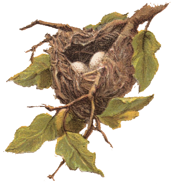 Free Vintage Clip Art - Nest with Eggs - The Graphics Fairy