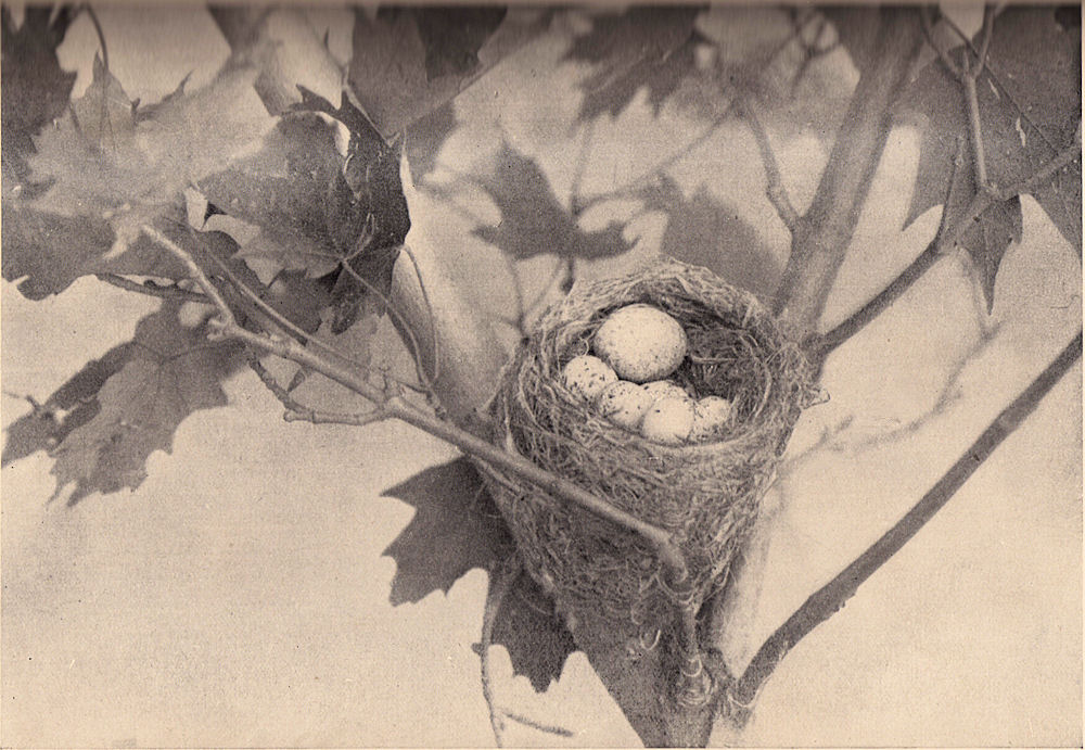 Nest clipart vintage bird, Picture #3006245 nest clipart vintage bird