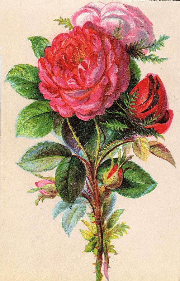 Free Vintage Clip Art - Beautiful Bouquet - The Graphics Fairy
