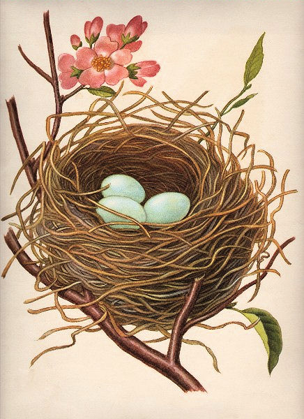 Bird nest clip art - photo#12