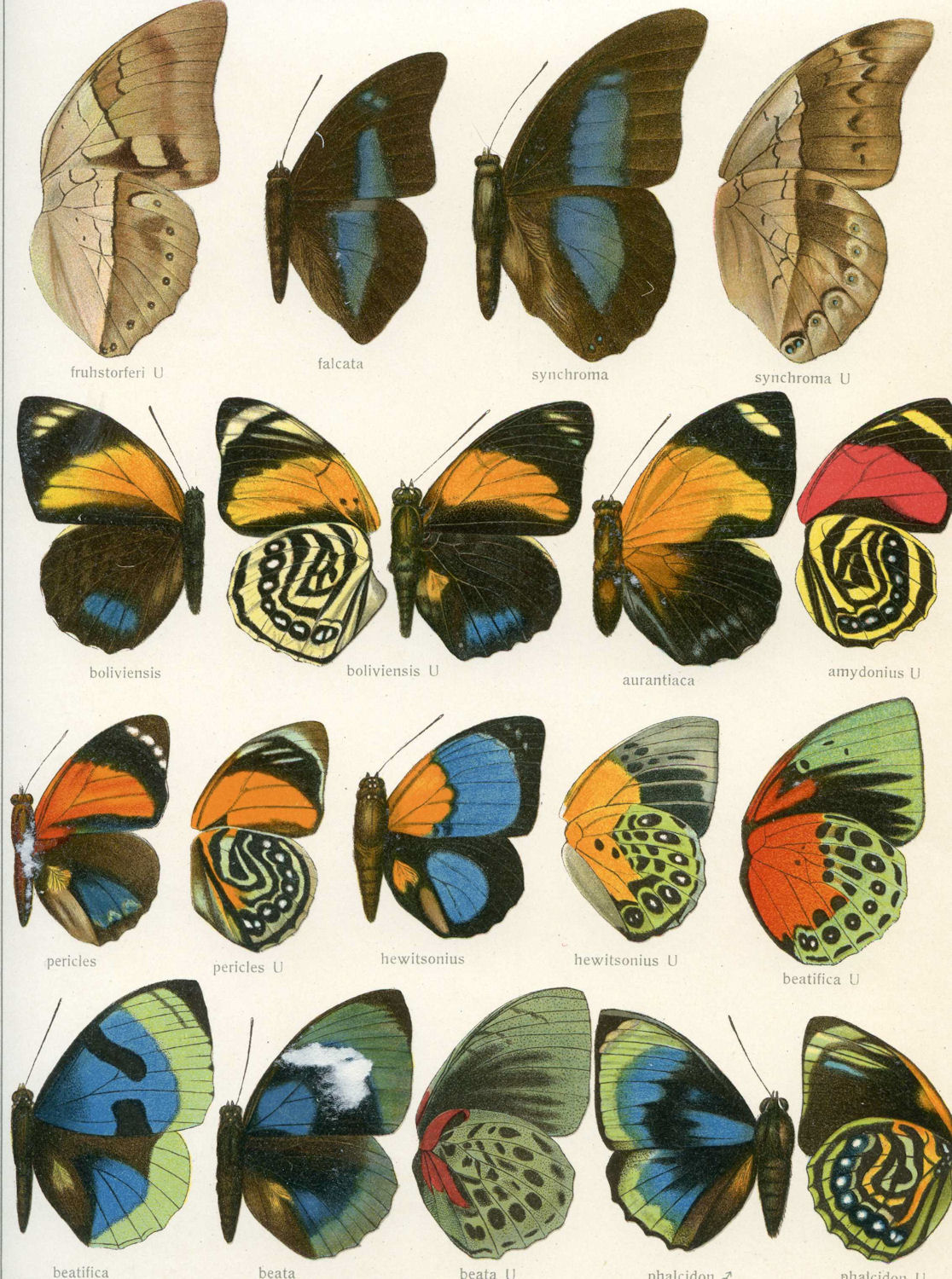 Free Vintage Clip Art - Butterfly Wings Galore - The Graphics Fairy