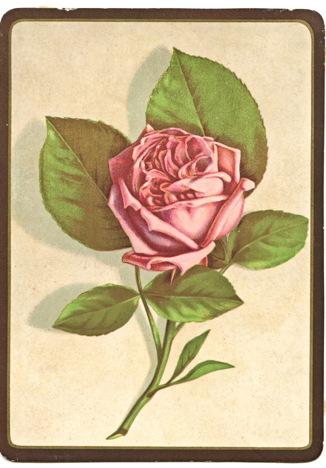 Free Vintage Clip Art     Perfect Pink RoseVintage Rose Clip Art