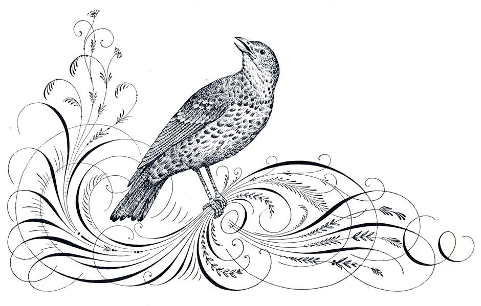 free antique clip art calligraphy flourishes and bird the