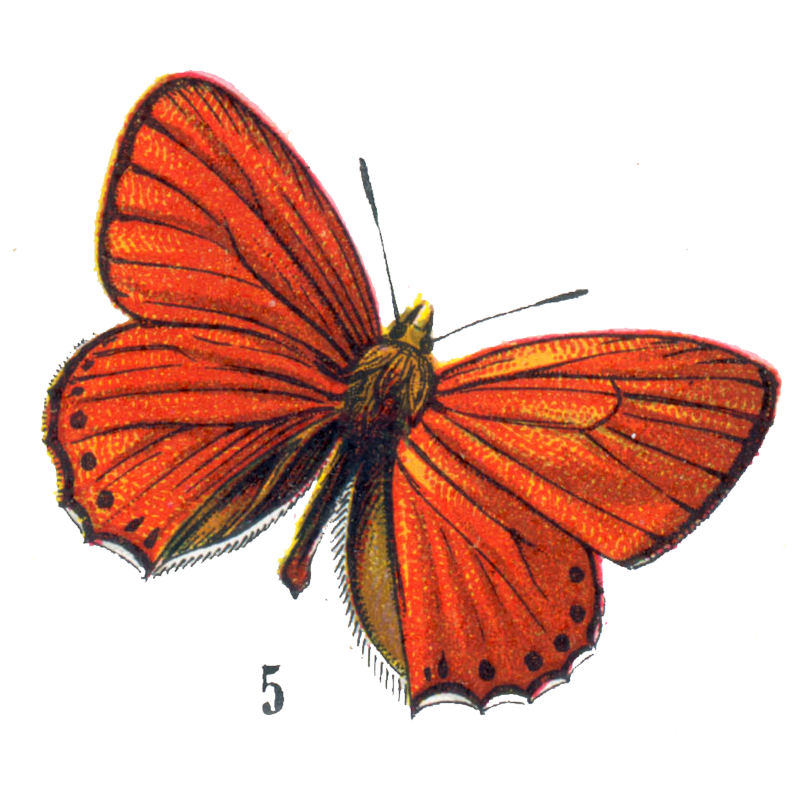 Free Vintage Clip Art - Orange Butterflies for Halloween ...