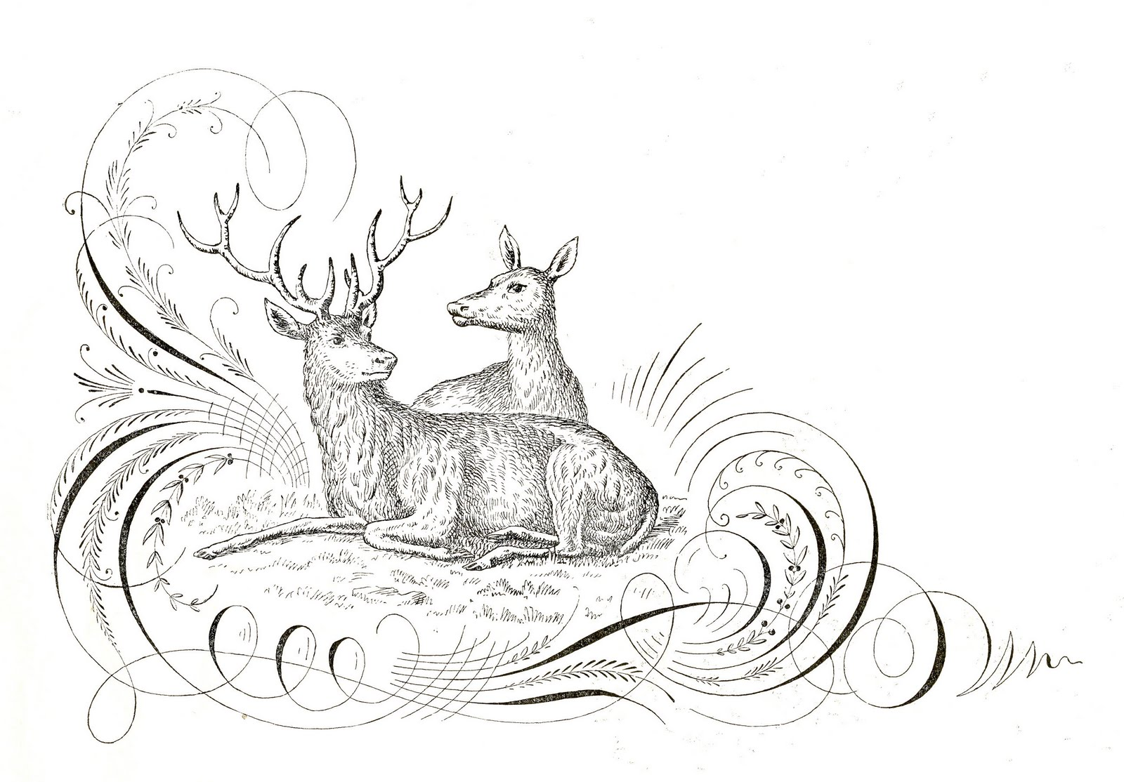 free antique clip art - pen flourishing with deer