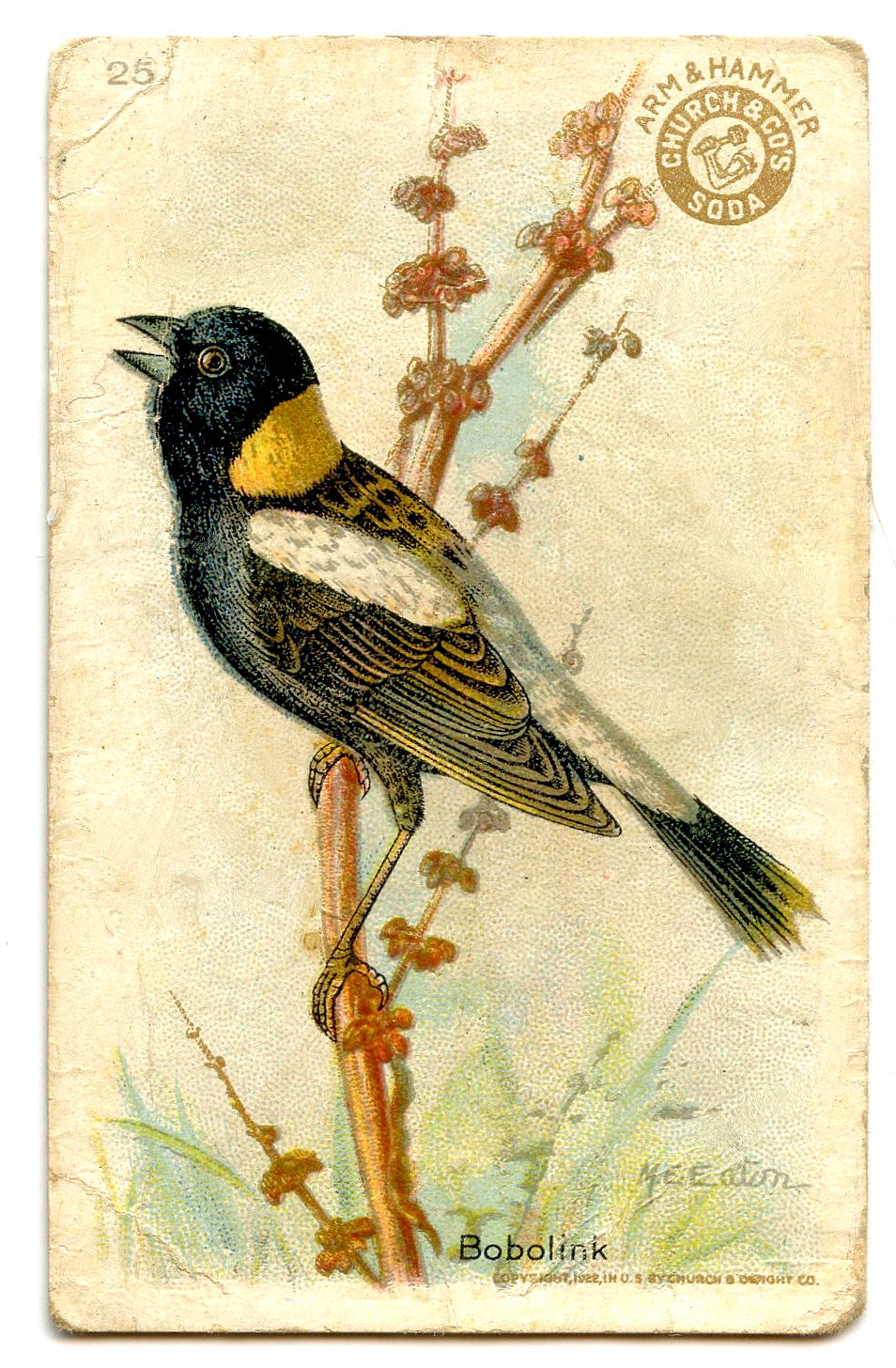 free clipart of vintage birds - photo #27