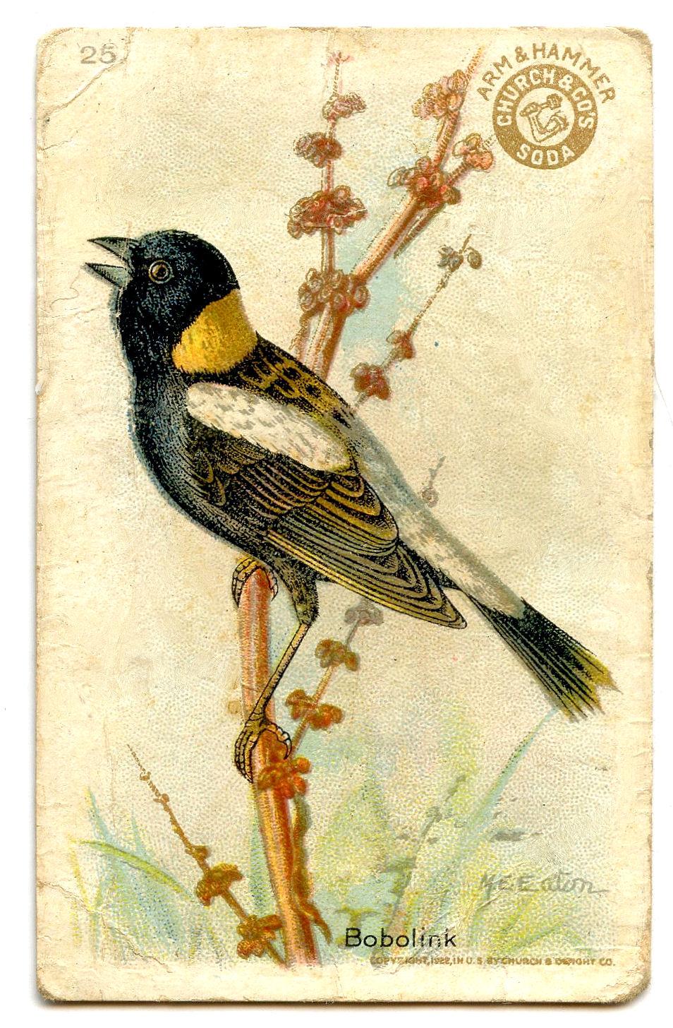 Free Vintage Clip Art Pretty Little Birds