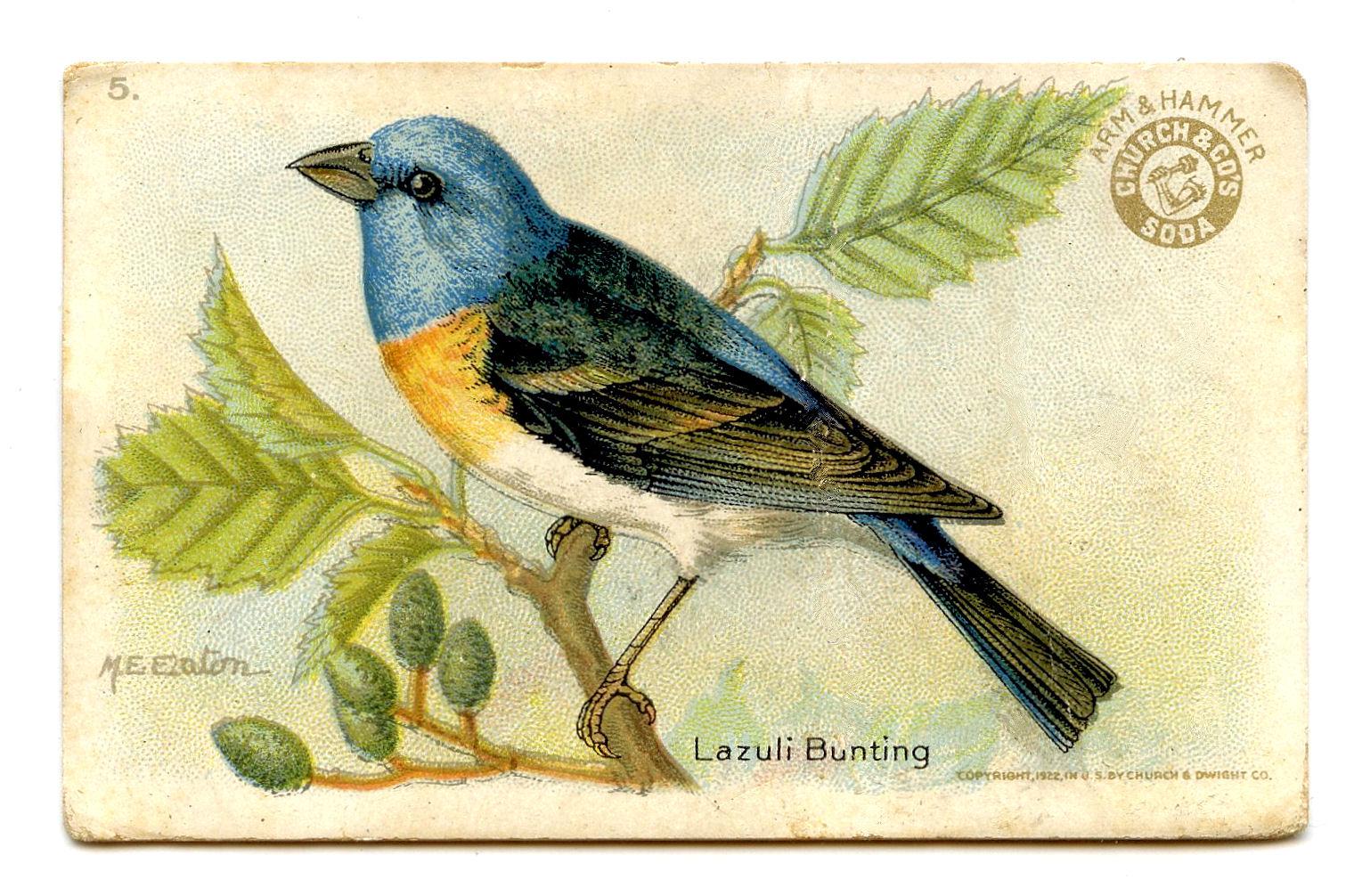 Vintage Bird Clipart 37