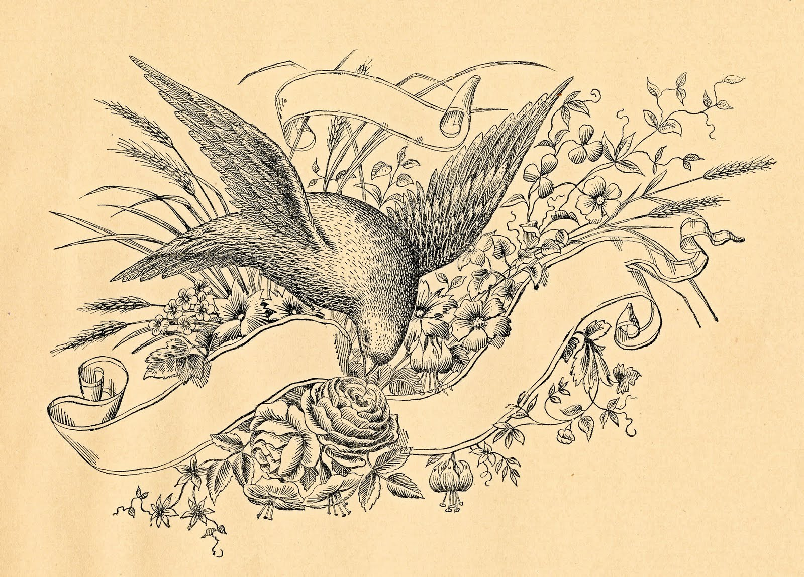 Free antique clip art amazing bird with ribbon banner the graphics fairy