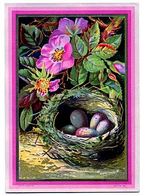 vintage bird nest with eggs illustration