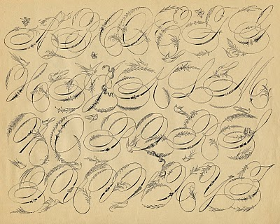 spencerian alphabet bird font