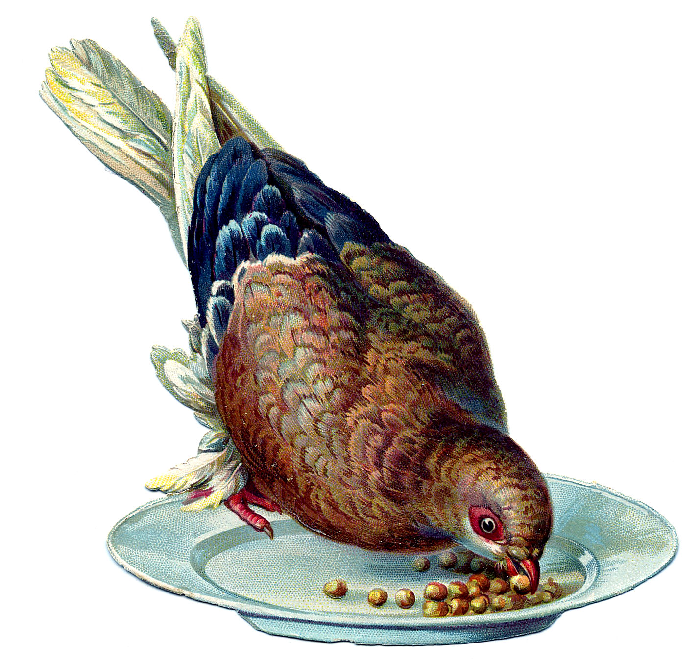 Vintage bird graphic dove