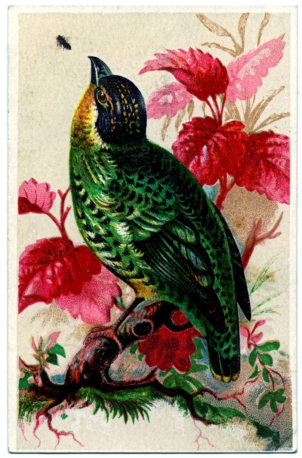 Vintage Trade Card Brightly Colored Bird The Graphics