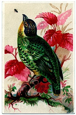 free vintage bird clip art green