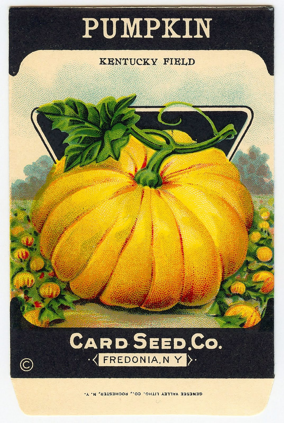 Vintage Clip Art Adorable Pumpkin Seed Packet