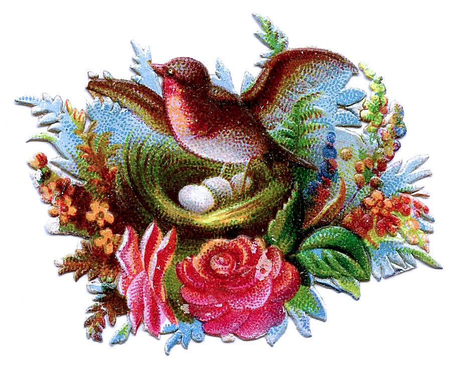 http://thegraphicsfairy.com/wp-content/uploads/blogger/_CarNcodpCMA/TDU4272Z_NI/AAAAAAAAIWc/Ksgw27C0gpQ/s1600/scrapbirds-graphicsfairy006c.jpg