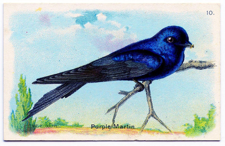 - 1bird-martin-graphicsfairy003