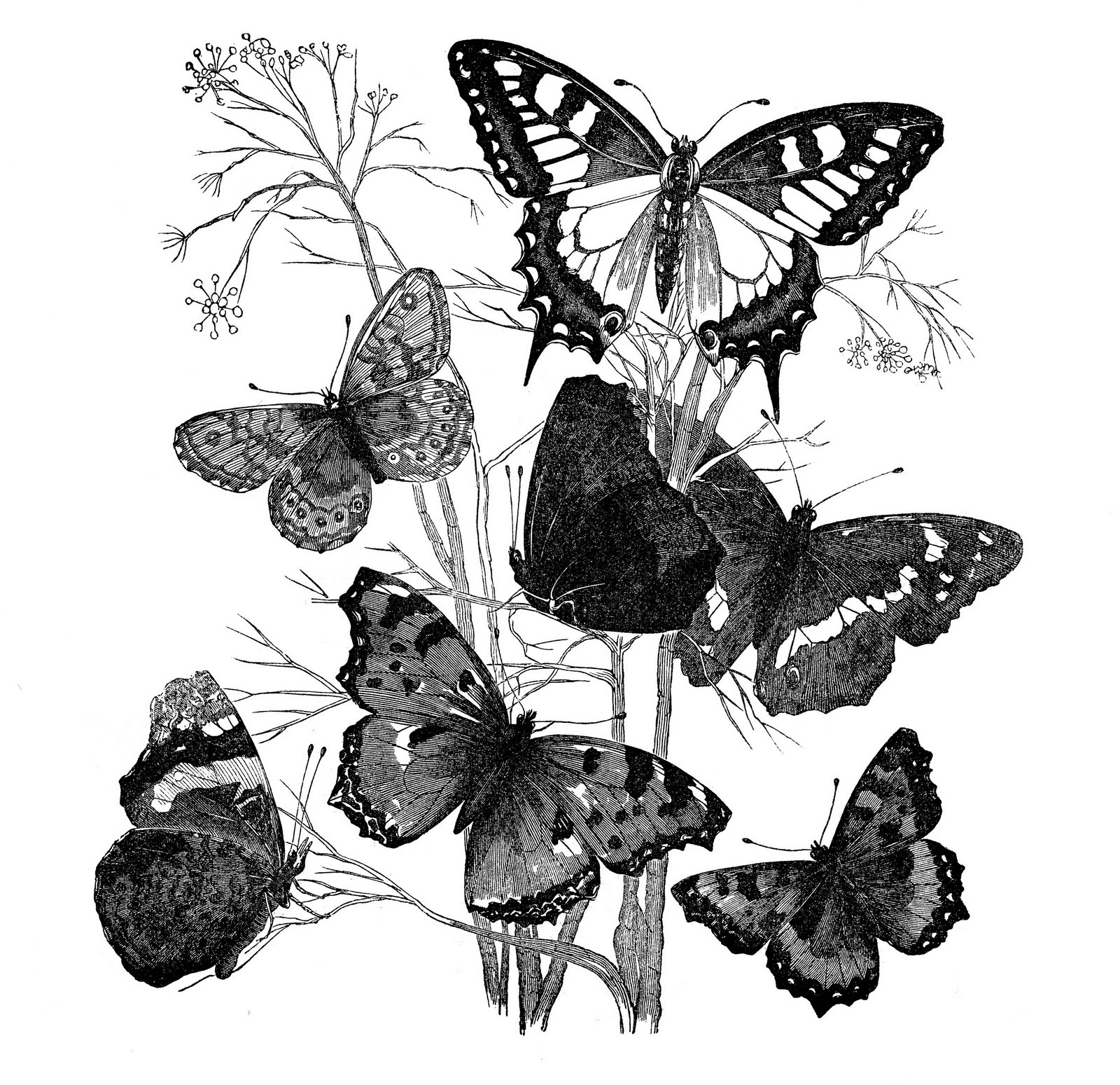 antique image - butterflies on branch