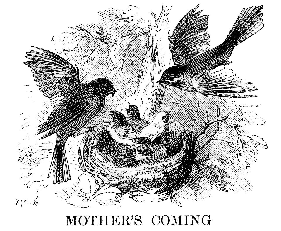 This is an image of Epic Bird In Nest Drawing