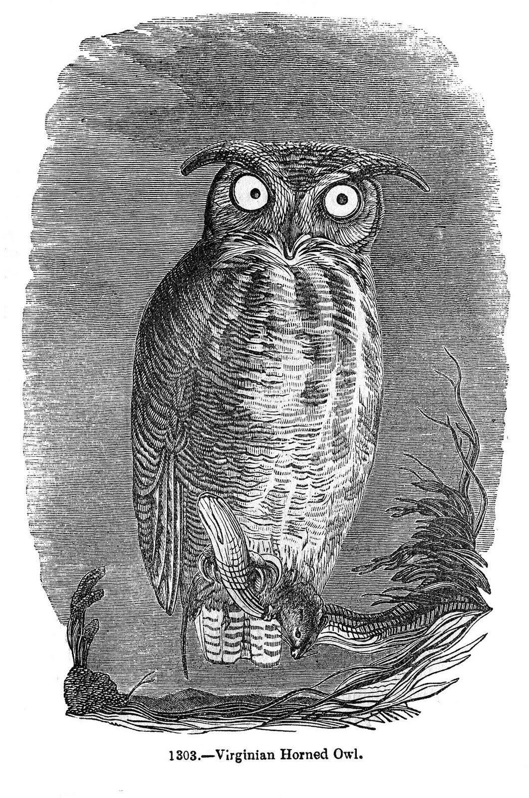 Vintage Halloween Clip Art - Spooky Owl - The Graphics Fairy