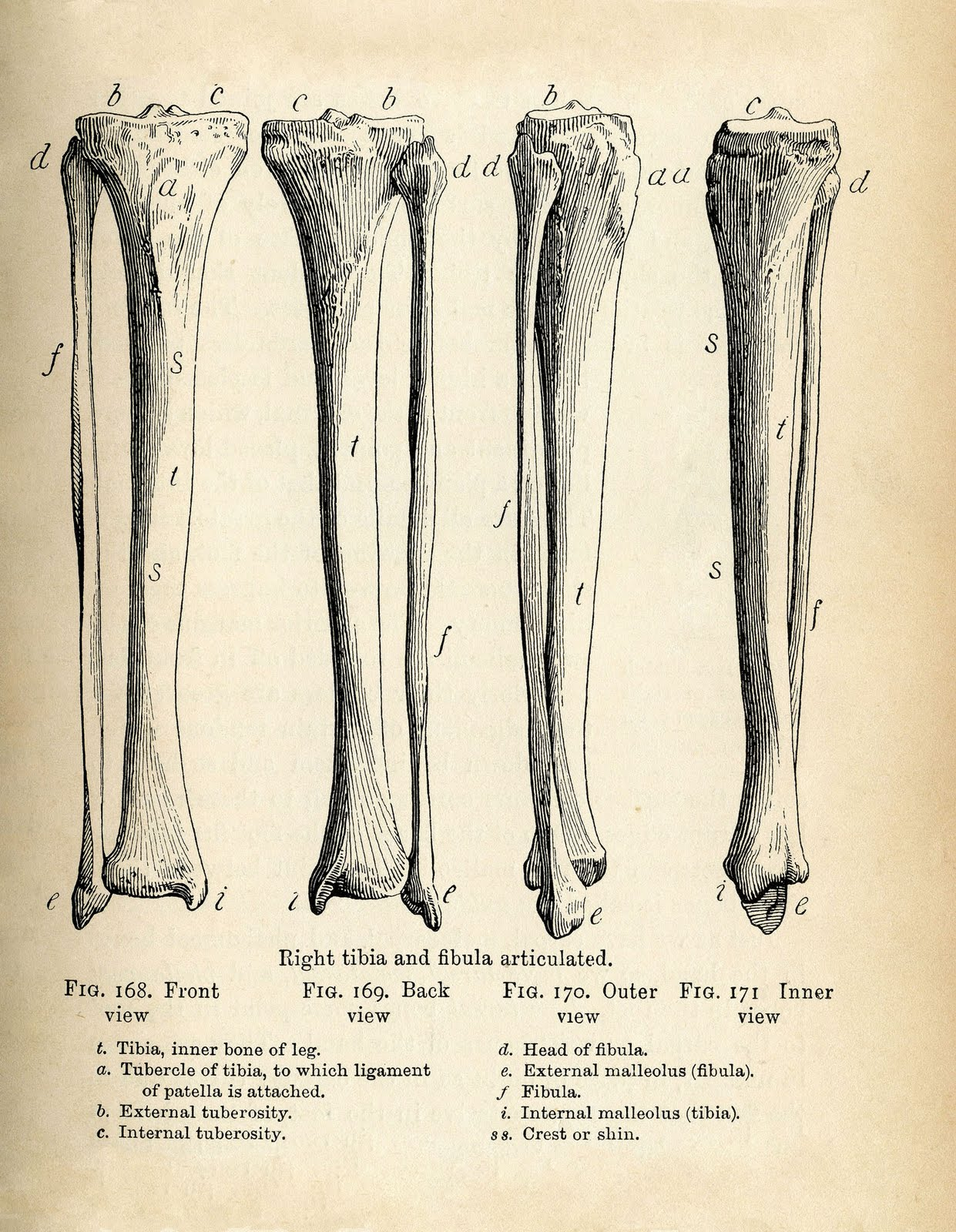 Vintage Anatomy Clip Art - Bones and Skull - Halloween - The ...