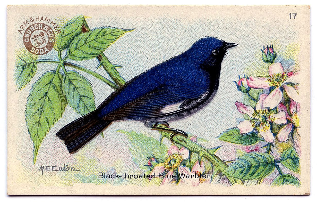 Vintage bird house paintings consider, that
