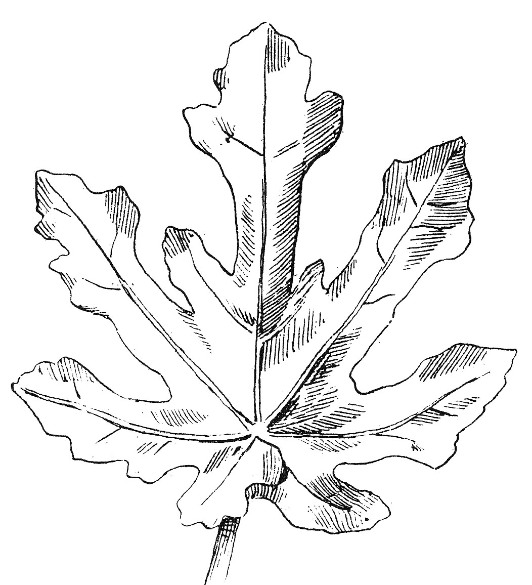 Vintage Clip Art - Beautiful Black and White Leaf Images ...