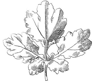 Vintage Clip Art Beautiful Black And White Leaf Images