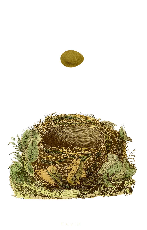 Сентября, открытка гнездо