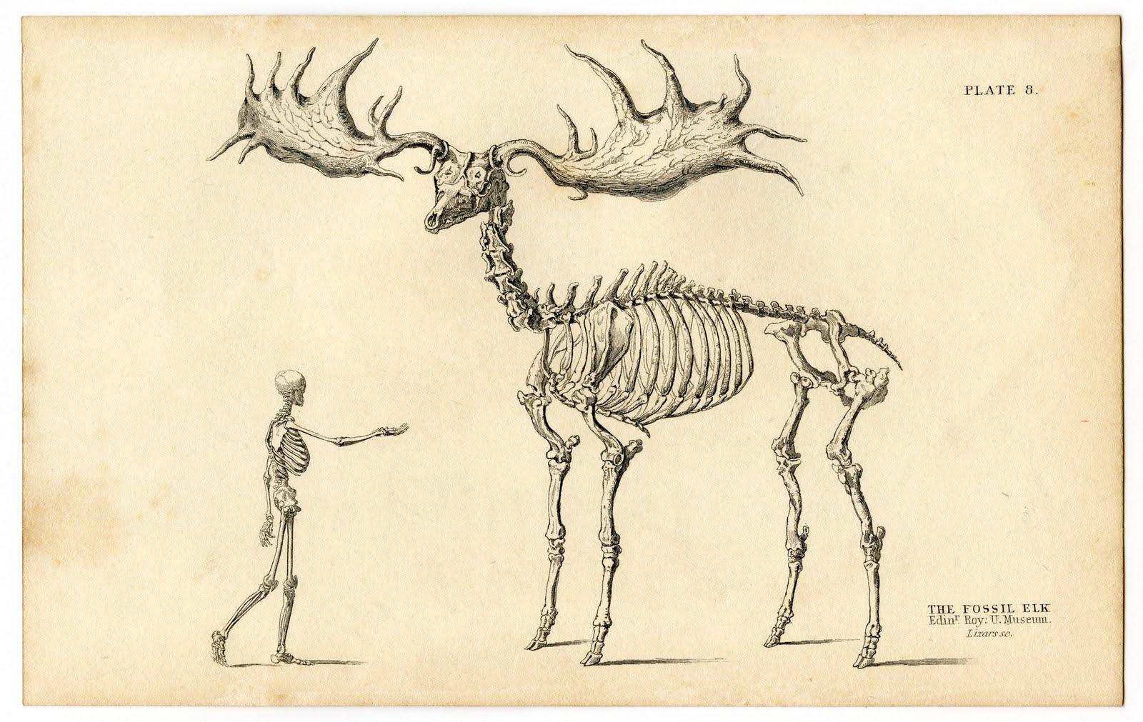 Walking Skeleton Man  ...