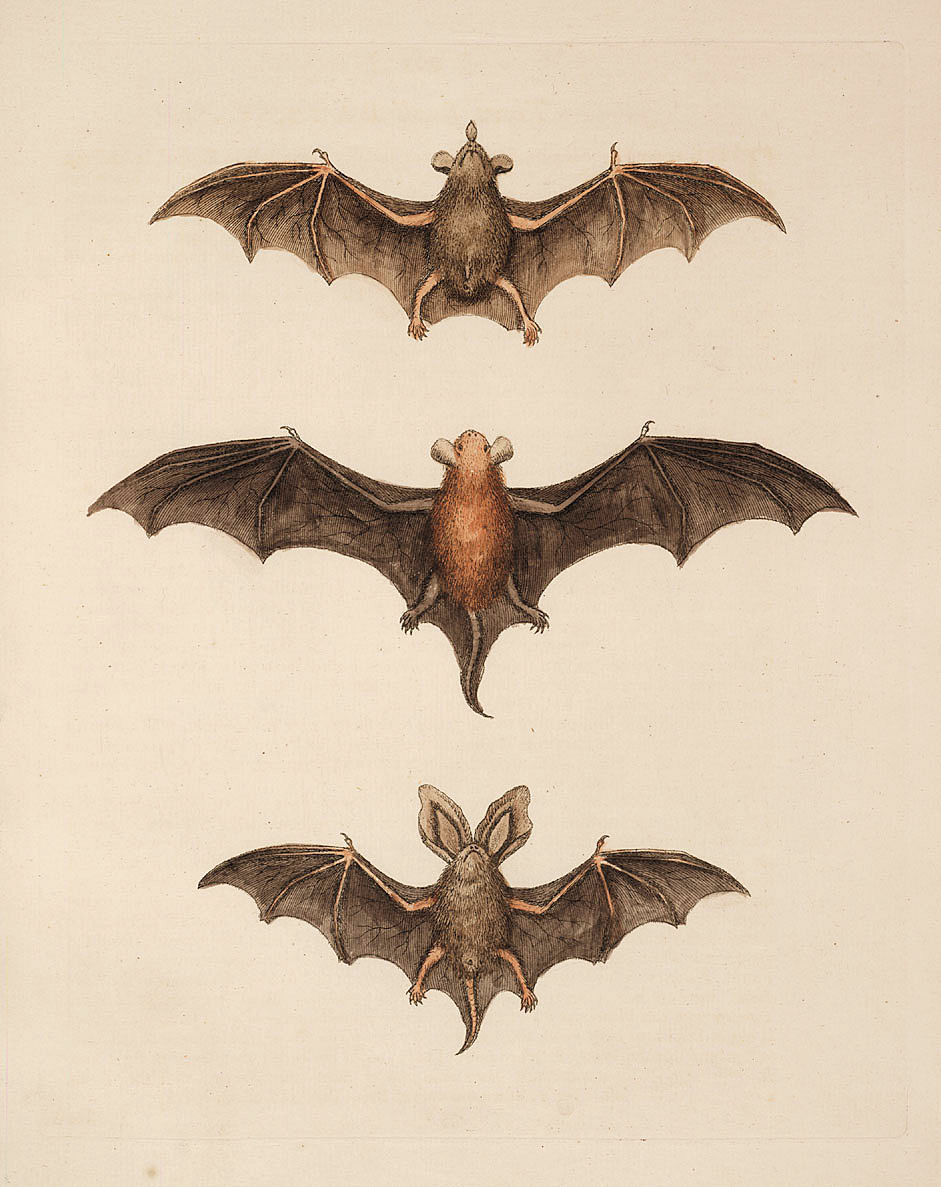 free halloween clipart bats - photo #30