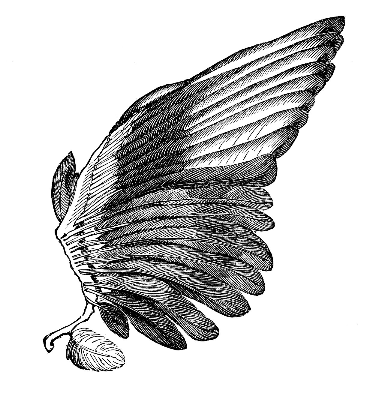 Vintage Clip Art Image - Feather Wings - For Angels - The ...