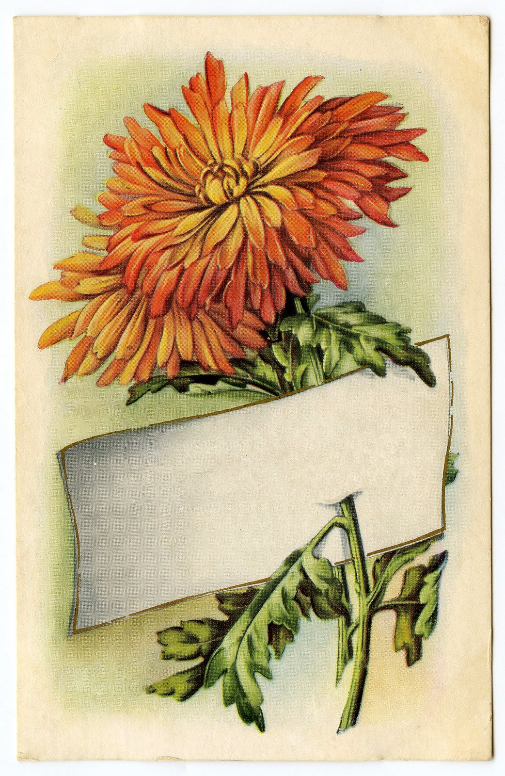 Vintage Thanksgiving Clip Art - Mums - Placecard - The ...