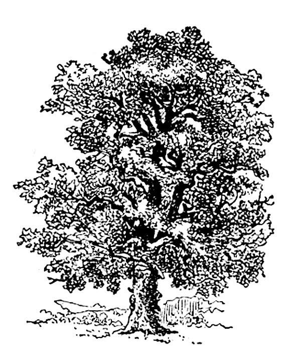 Oak tree clothing store